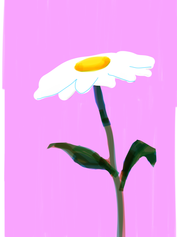 drawing of daisy-like flower on pink background